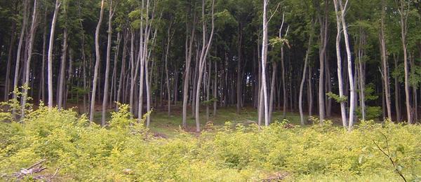 ForCons Magán-erdőgazdálkodás