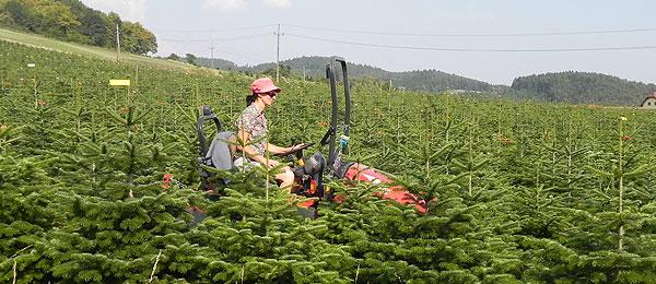 ForCons karácsonyfa ültetvény