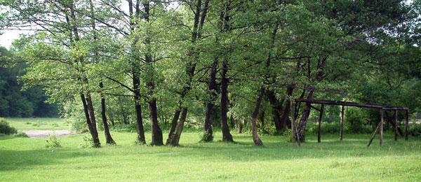 ForCons Erdő-környezetvédelmi (EKV) támogatások